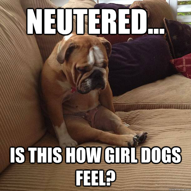 neutered is this how girl dogs feel - depressed dog