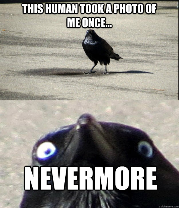 this human took a photo of me once nevermore -
