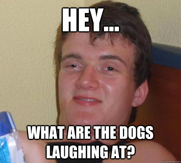 hey what are the dogs laughing at - 10 Guy