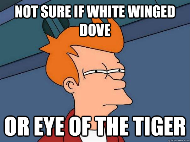 not sure if white winged dove or eye of the tiger - Futurama Fry