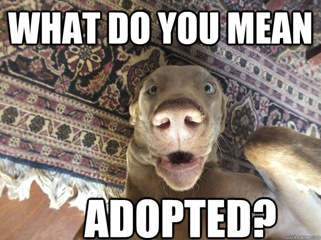 what do you mean adopted - SURPRISED DOG