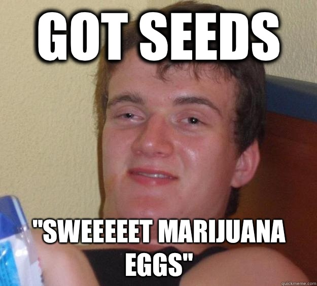 Got Seeds Sweeeeet Marijuana Eggs - 10 Guy