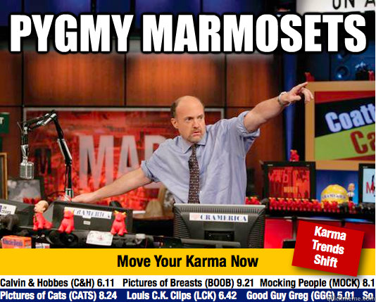 pygmy marmosets  - Mad Karma with Jim Cramer