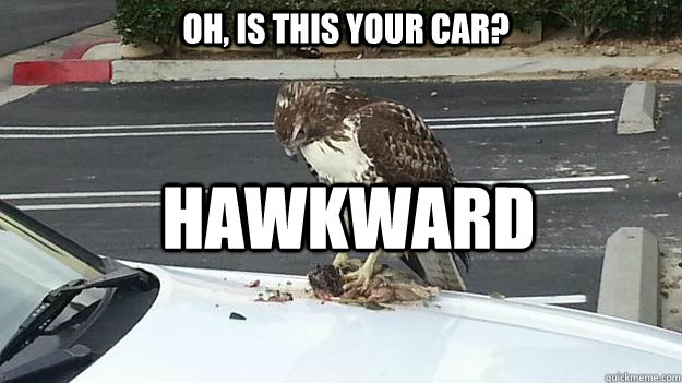 oh is this your car hawkward - 