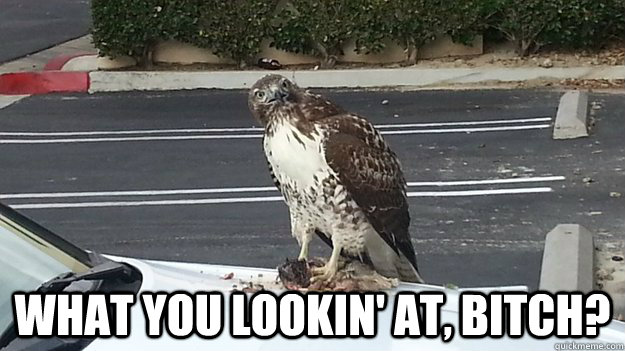 what you lookin at bitch -