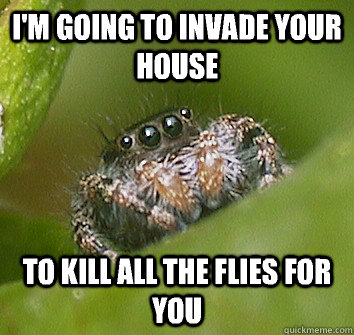 im going to invade your house to kill all the flies for you - Misunderstood Spider