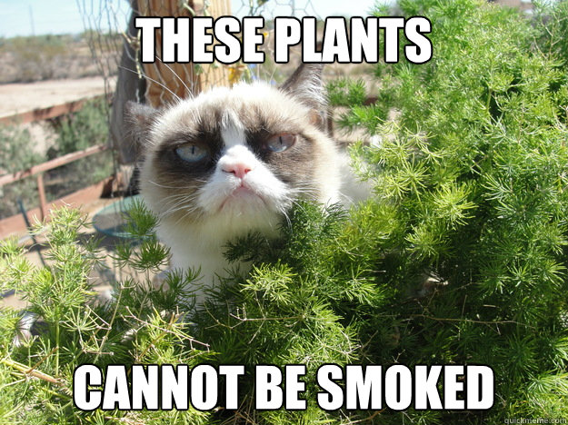 these plants cannot be smoked -