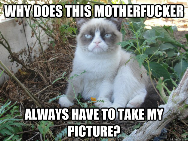 why does this motherfucker always have to take my picture - grumpy cat