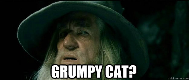 grumpy cat - Gandalf