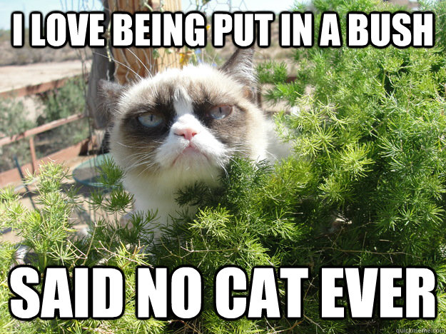 i love being put in a bush said no cat ever - Grumpy Cat Bush