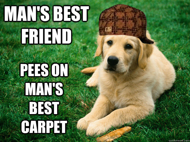 mans best friend pees on mans best carpet - Scumbag Dog