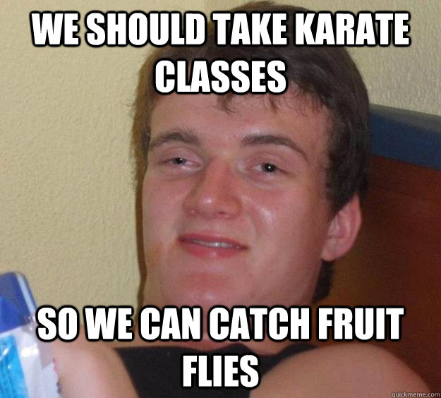 we should take karate classes so we can catch fruit flies - 10 Guy