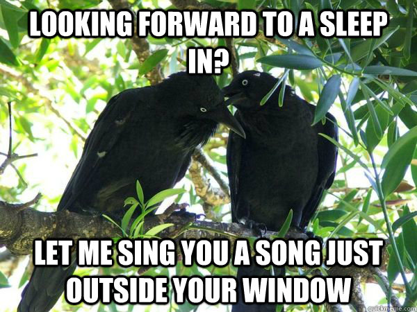 looking forward to a sleep in let me sing you a song just o - Scumbag Ravens