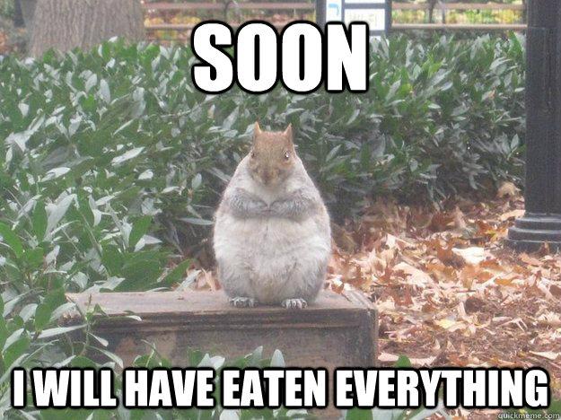 Squirrel Meme Wwwimgkidcom The Image Kid Has It