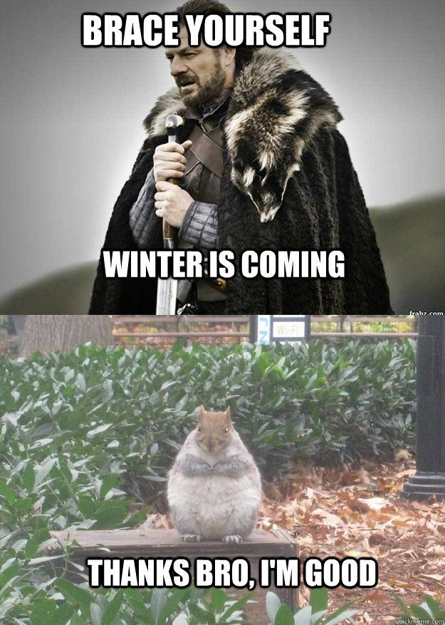 brace yourself winter is coming thanks bro im good - Fat Squirrel