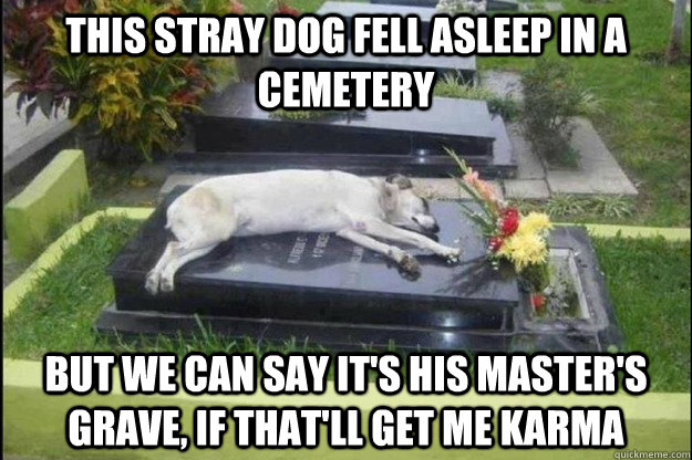 this stray dog fell asleep in a cemetery but we can say its -