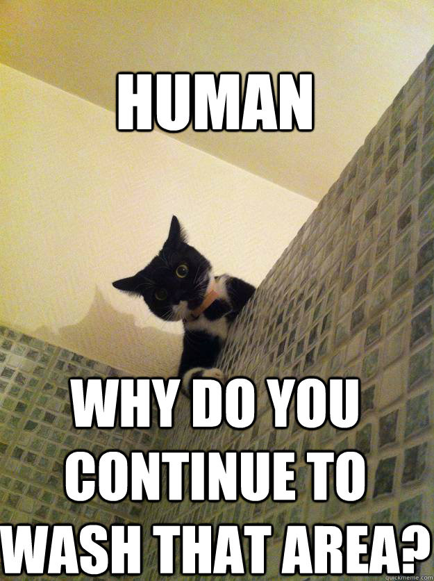 human why do you continue to wash that area - Incredulous Cat