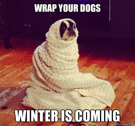 wrap your dogs winter is coming - wrap your dogs