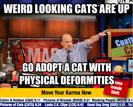 weird looking cats are up go adopt a cat with physical defor - Mad Karma with Jim Cramer