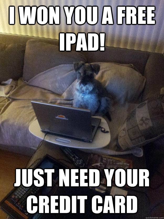 i won you a free ipad just need your credit card - Surfing Schnauzer