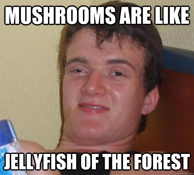 mushrooms are like jellyfish of the forest - 10 Guy
