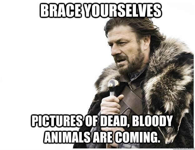 brace yourselves pictures of dead bloody animals are coming - Imminent Ned
