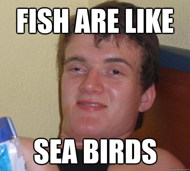 fish are like sea birds  - 10 Guy