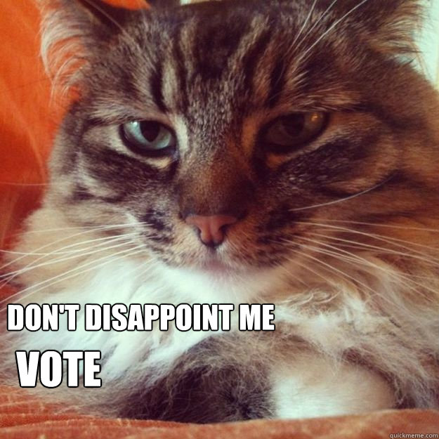 dont disappoint me vote - VoteCat