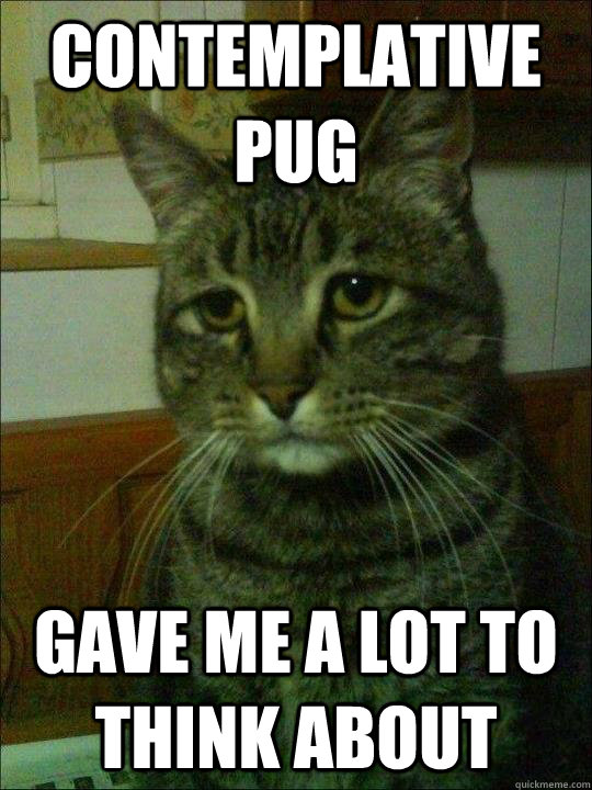 contemplative pug gave me a lot to think about - Depressed cat