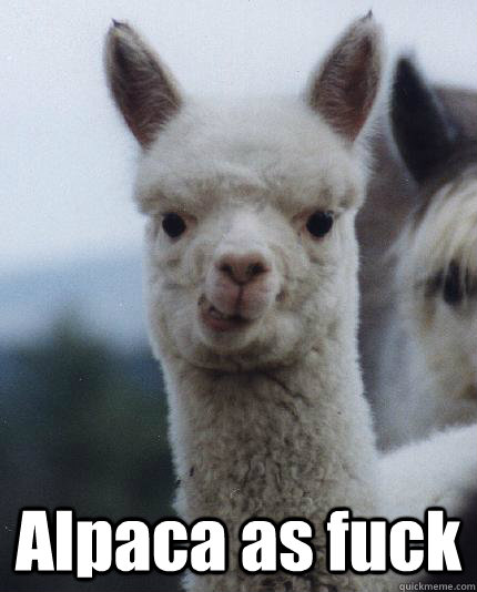 alpaca as fuck - ALPACA