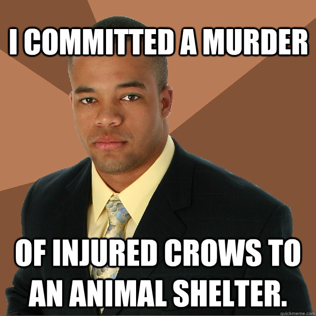 i committed a murder of injured crows to an animal shelter - Successful Black Man
