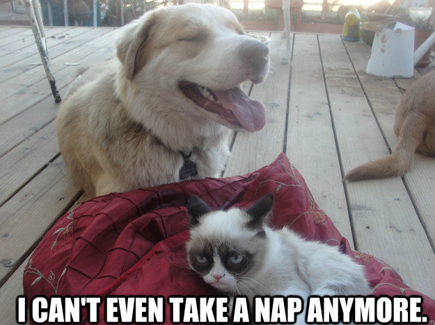 i cant even take a nap anymore  - another grumpy cat