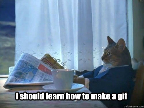 i should learn how to make a gif - Fancy Cat