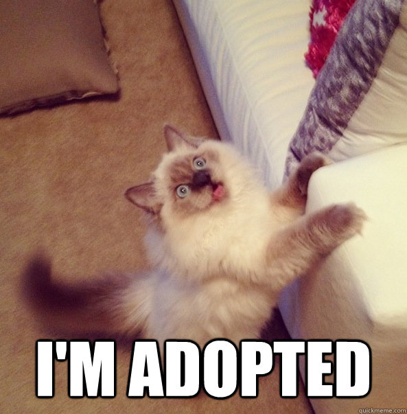 im adopted - Sudden realization cat