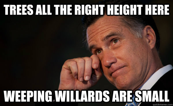 trees all the right height here weeping willards are small - Sad Romney