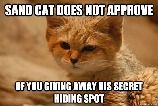 sand cat does not approve of you giving away his secret hidi - Sand Cat does not approve