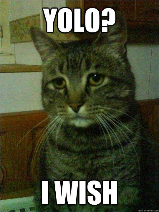 yolo i wish - Depressed cat