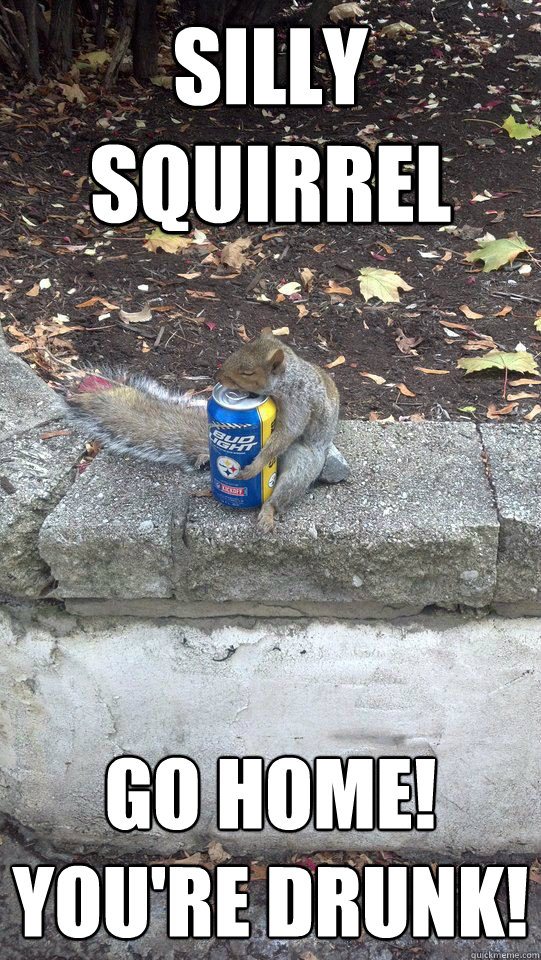 silly squirrel go home youre drunk - Silly Squirrel