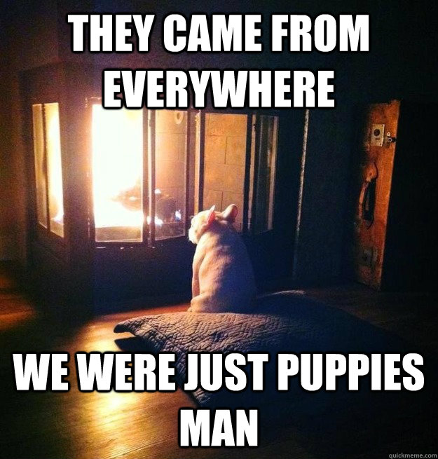 they came from everywhere we were just puppies man - Reflecting Bruce