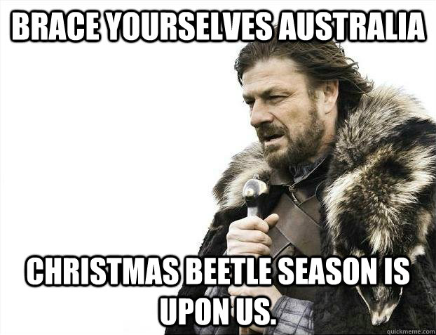 brace yourselves australia christmas beetle season is upon u - Brace yourselves