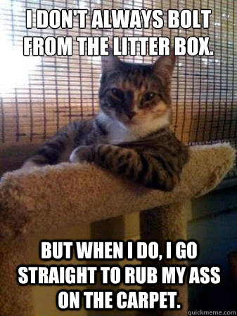 i dont always bolt from the litter box but when i do i go - The Most Interesting Cat in the World