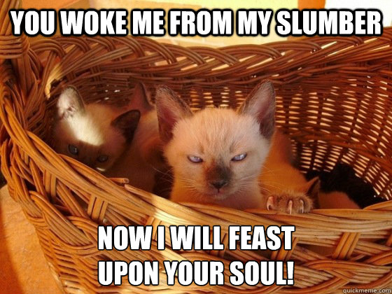 you woke me from my slumber now i will feast upon your soul - Evil cat is evil
