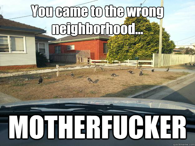 you came to the wrong neighborhood motherfucker - Magpie Thugs