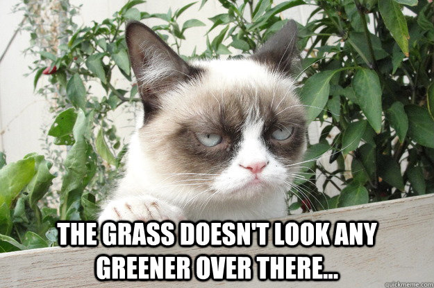 the grass doesnt look any greener over there -