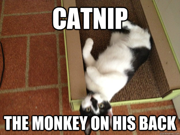 catnip the monkey on his back - catnip