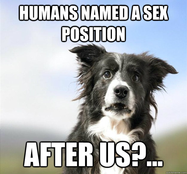 humans named a sex position after us -