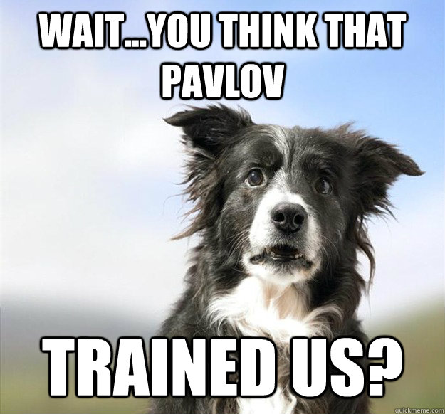 waityou think that pavlov trained us -