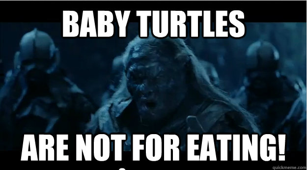 baby turtles are not for eating - They Are Not For Eating