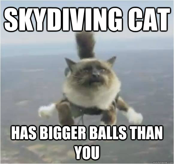 skydiving cat has bigger balls than you -