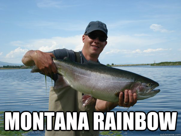 montana rainbow - Not a bad Trout